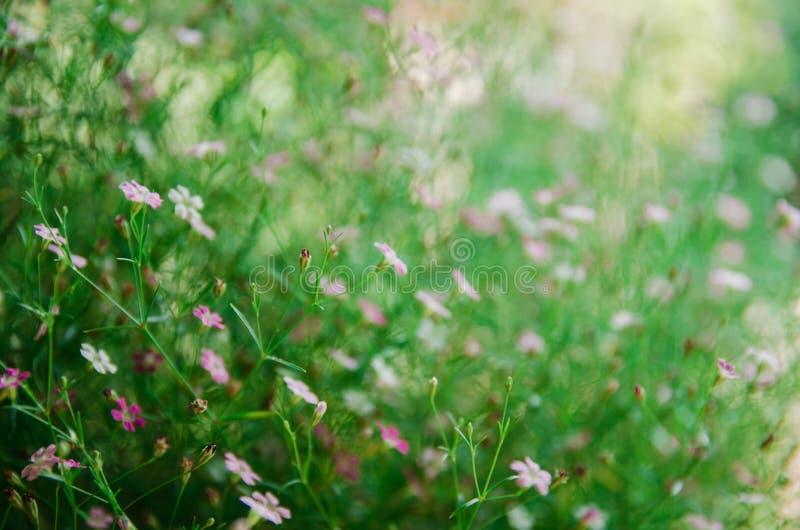 schließen Sie oben von der weißen und rosa Blume lizenzfreie stockbilder