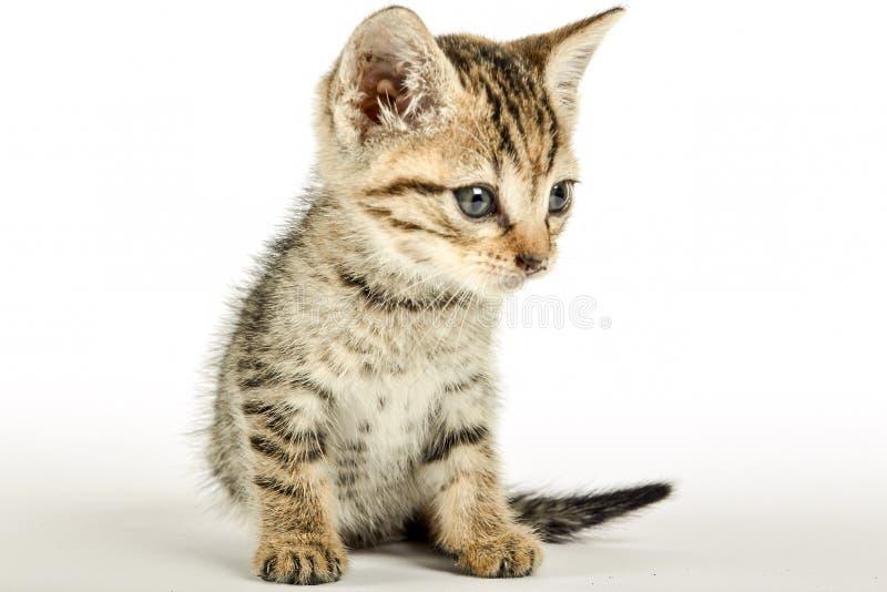 Schließen Sie oben von einem kittie stockbild