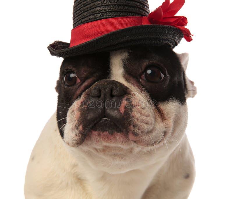Schließen Sie oben von einem netten Welpen, der einen schwarzen Hut trägt lizenzfreies stockbild
