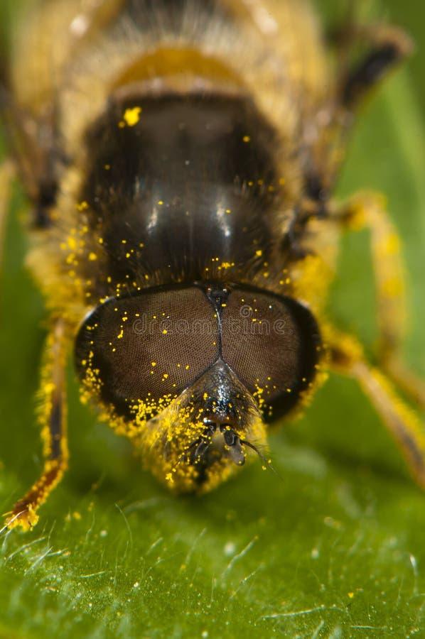 Schließen Sie oben von einer Biene stockbilder