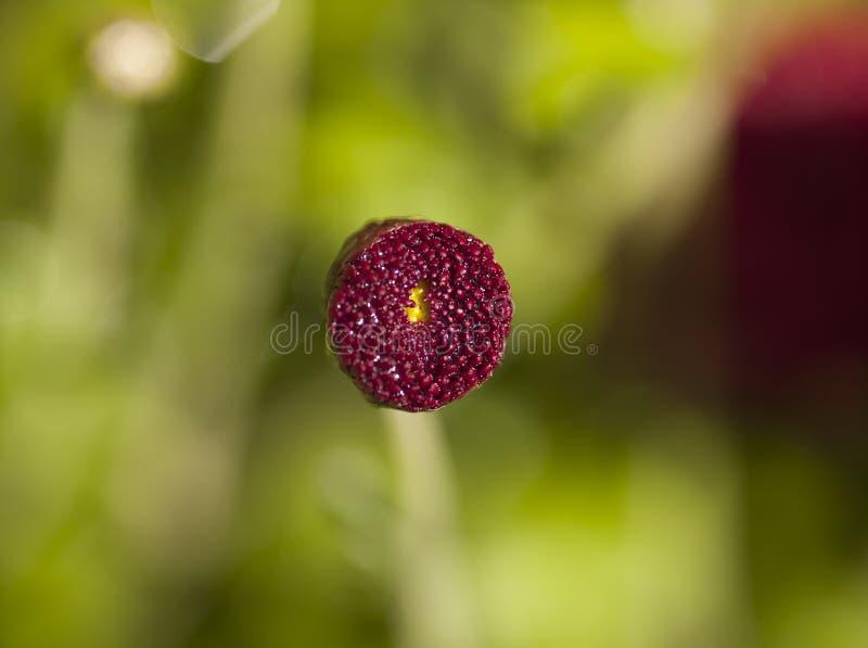 Schließen Sie oben von einer Blumenblüte stockbild