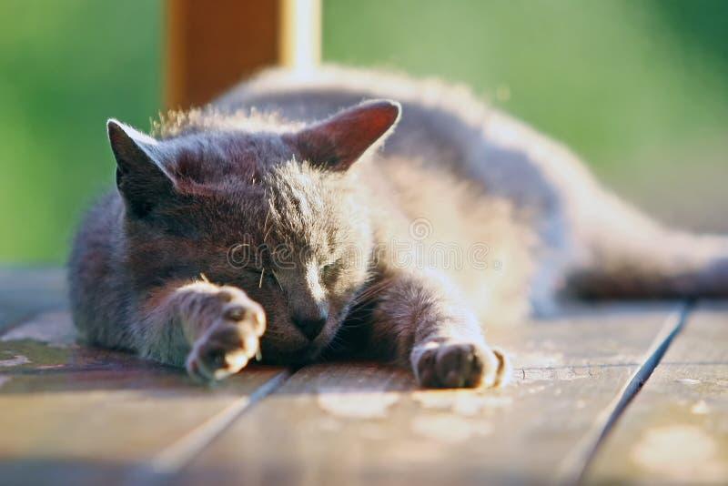 Schließen Sie oben von einer Katze, die auf hölzernem Stand schläft lizenzfreie stockbilder