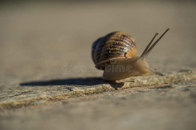 Schließen Sie oben von einer kleinen Schnecke, die auf einer Betonmauer gleitet lizenzfreie stockfotos