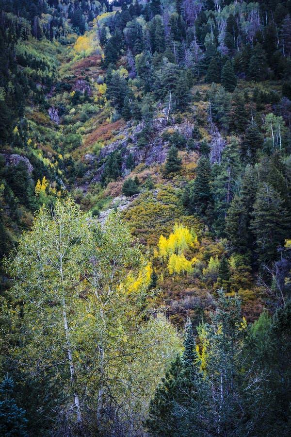 Schließen Sie oben von einer Lawine von Fall-Farben in den Bergen lizenzfreie stockbilder