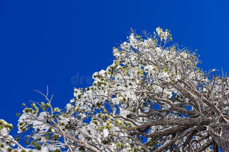 Schließen Sie oben von gefrorenen Zweigen und vom Schnee, die gegen blauen Himmel fällt lizenzfreie stockfotos