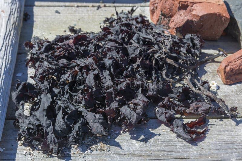 Schließen Sie oben von getrockneter Meerespflanze in der Sonne, die auf einen Bretterboden legt lizenzfreie stockfotografie