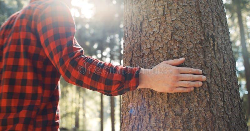 Schließen Sie oben von Mann ` s Handrührendem Baum auf grünem Waldhintergrund stockfotos