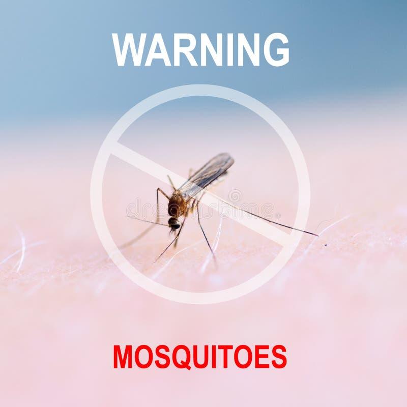 Schließen Sie oben von saugendem Blut des Moskitos auf menschlicher Haut, Moskito ist Träger von Malaria gehirnentzündung Dengue- stockfotografie