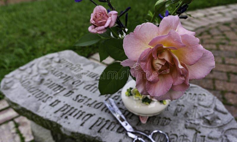 Schließung von vollständig geöffneter, teilweise geöffneter Peace Rose, rosa, gelb auf einer Steinbank mit Schere lizenzfreie stockbilder