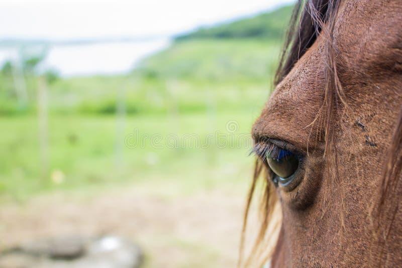 Schließen Sie oben vom braunen Pferdeauge am sonnigen Tag lizenzfreie stockbilder
