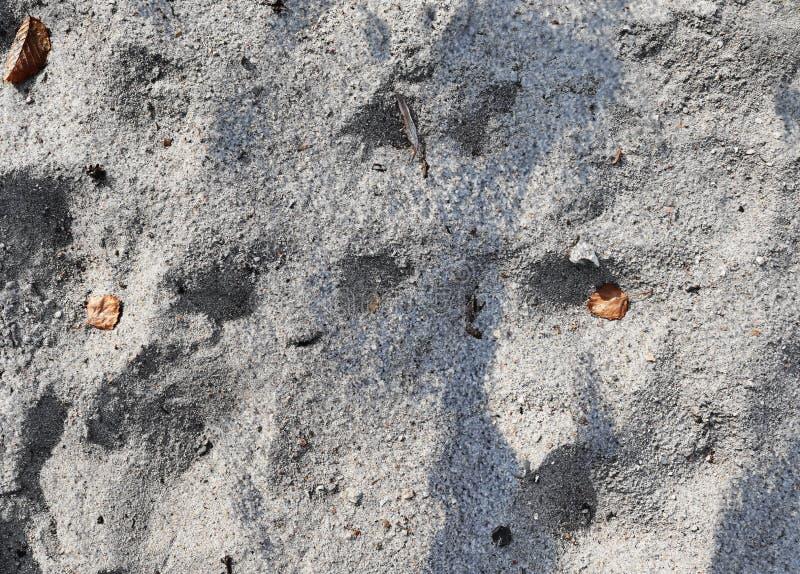 Schließen Sie oben von der Oberfläche des Sandes am Ostseestrand in der hohen Auflösung stockbild