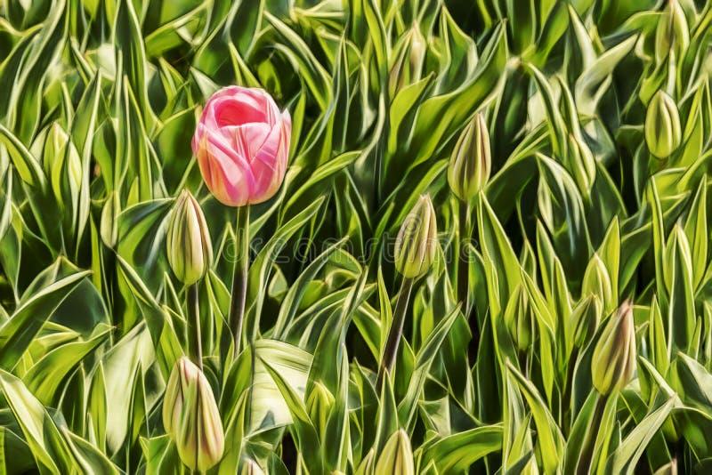 Schlie?en Sie herauf Tulpen in der Natur lizenzfreies stockbild