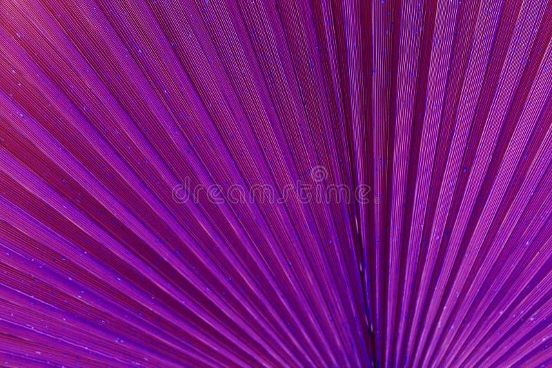 Schlie?en Sie oben vom Palmblatt Abstrakter Hintergrund, purpurroter surrealer Ton stockbilder