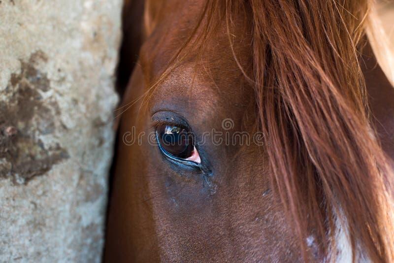 Schlie?en Sie oben vom Pferd stockfotos