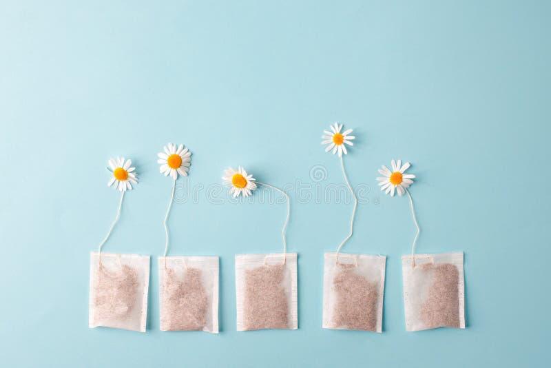 Schlie?en Sie oben von der Teezeit Trockener Kamillentee im Teebeutel, minimales Konzept Das kreative Kamillenantikrisengetränk b stockbilder