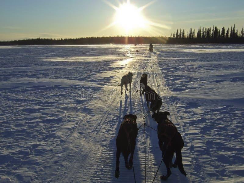Schlittenhunde in der schneebedeckten Landschaft lizenzfreie stockbilder