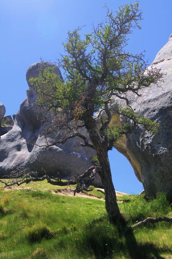Schloss-Hügel, Neuseeland: Zerstreute Kalksteinflusssteine auf einer Wiese und und dem lokalisierten gekrümmten bloßen Baumkontra stockbild