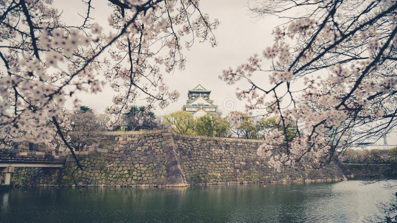 Schloss Japans Osaka mit Kirschblüte Japanische Frühlingsansicht , v lizenzfreie stockbilder