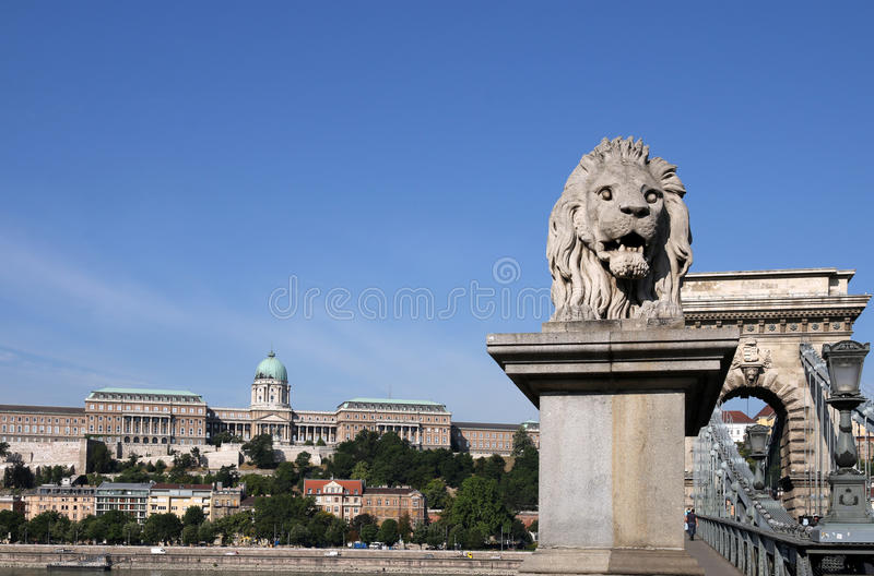 Schloss- und Hängebrückelöwestatue Budapest stockfotos