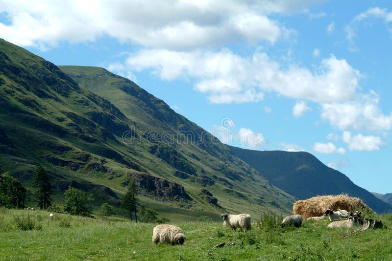 Schlucht Clova, Schottland stockfotografie