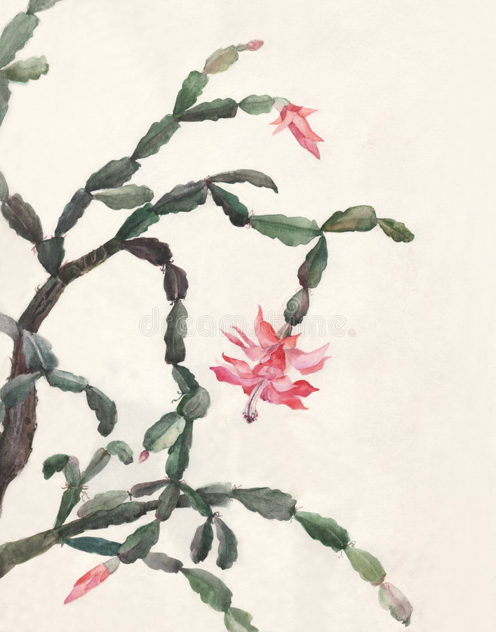Schlumbergera flowers watercolor painting