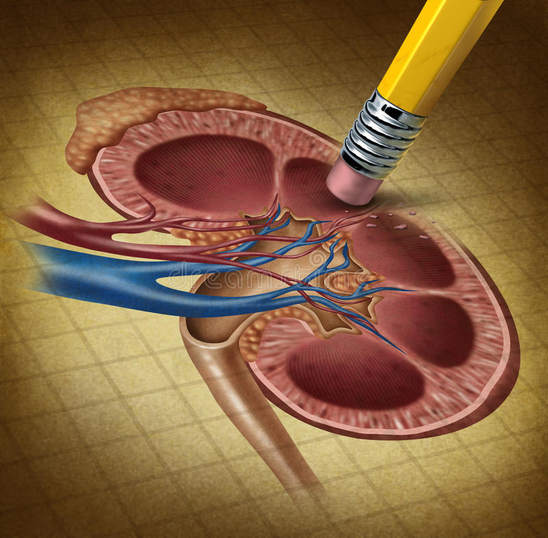 Schlusse Niere-Gesundheit lizenzfreie abbildung