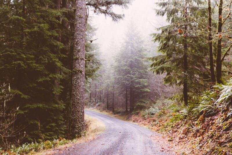 Schmale curvy Straße mitten in dem Wald stockbilder