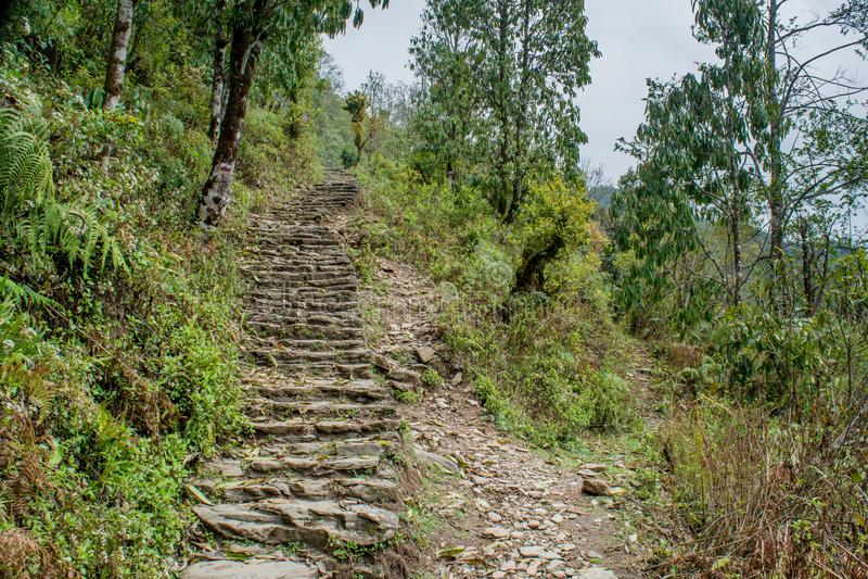Schmale, lange Wanderwege aus Felsen im Wald bei Mardi Himal Trekking lizenzfreie stockbilder