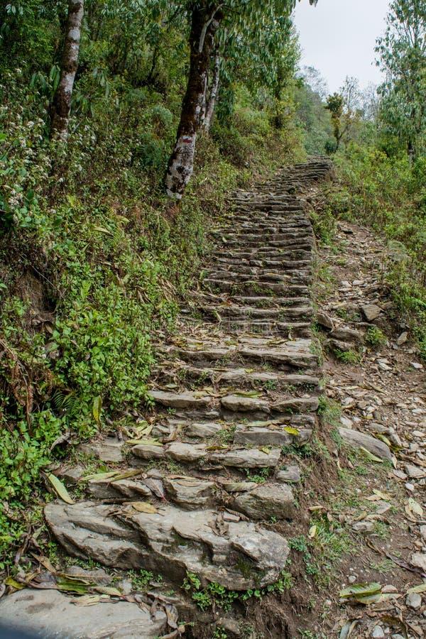 Schmale, lange Wanderwege aus Felsen im Wald bei Mardi Himal Trekking stockfotos