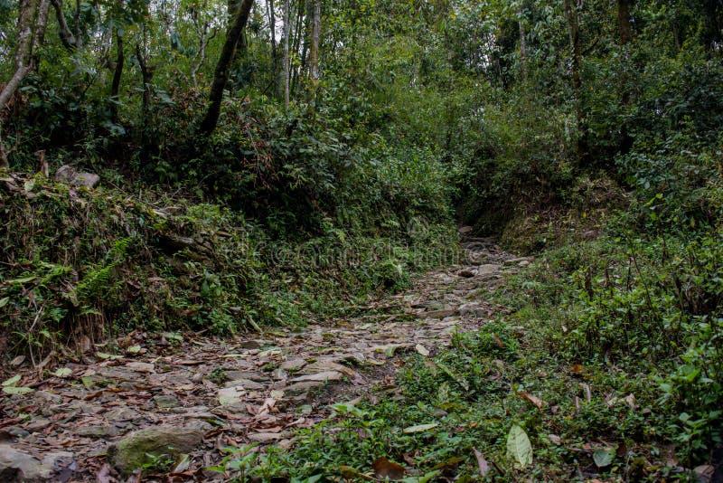 Schmale Waldwege im Wald auf Mardi Himal Trekking lizenzfreie stockfotografie