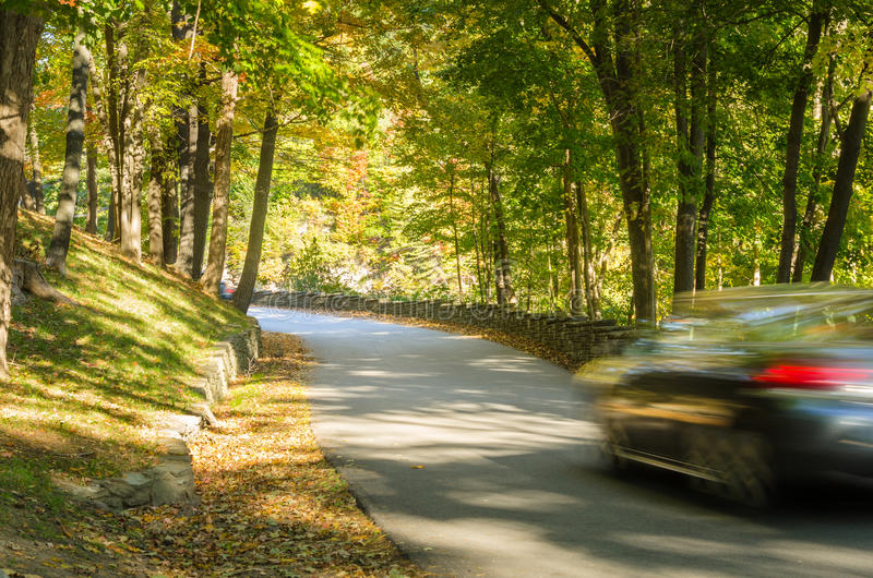 Schmaler Forrest Road im Herbst stockfoto
