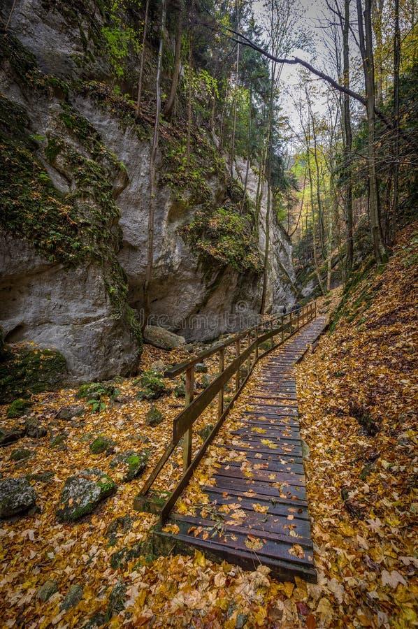 Schmales felsiges Tal mit großer Steinwand des hölzernen Weges im bunten Herbstwald, Steinwandklamm stockbild
