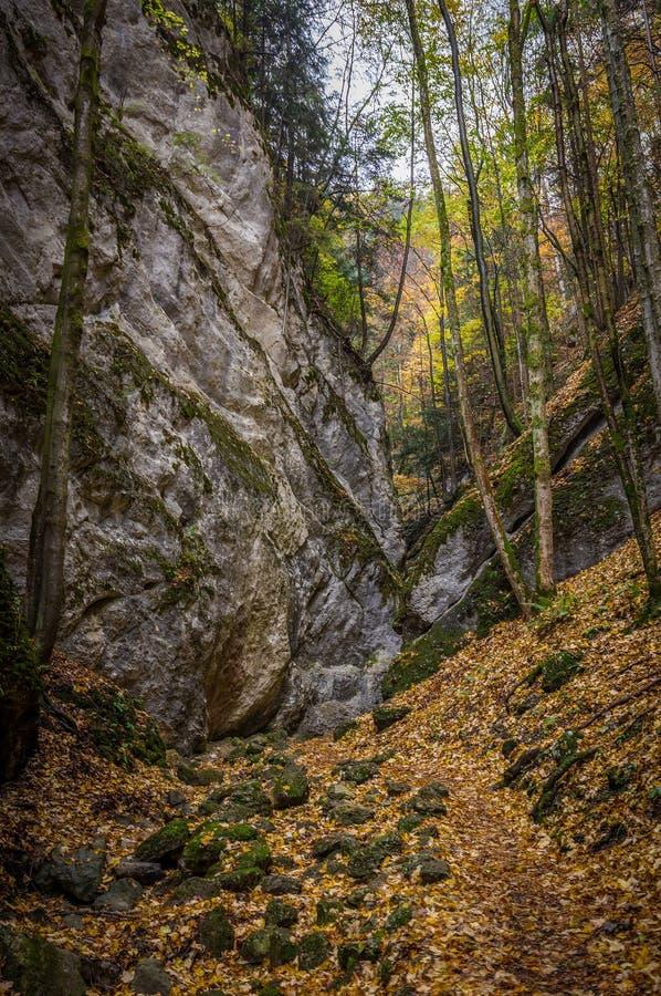 Schmales felsiges Tal mit großer Steinwand im bunten Herbstwald, Steinwandklamm stockfoto
