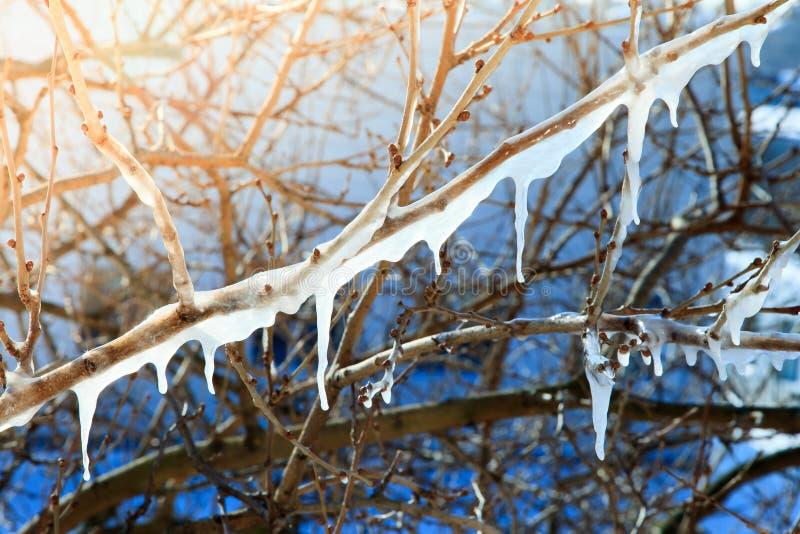 Schmelzen von Eiszapfen auf Niederlassungen lizenzfreies stockbild