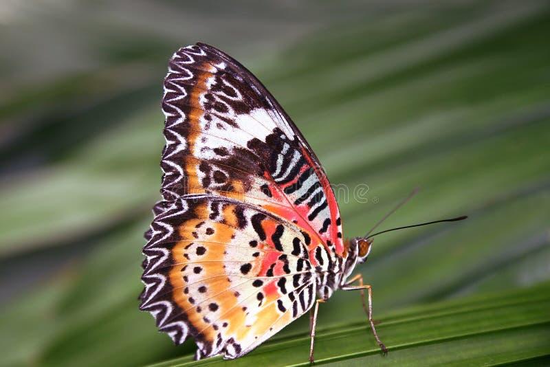 Schmetterling stockbild