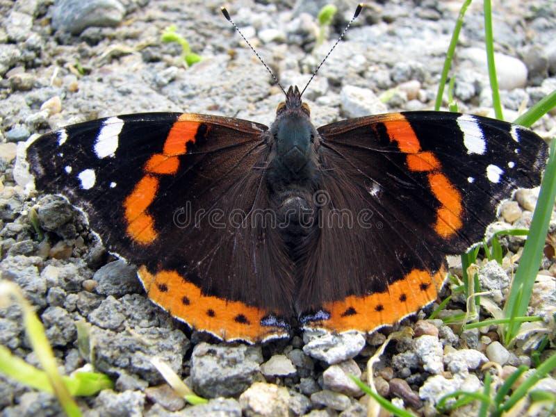 Schmetterling lizenzfreies stockfoto