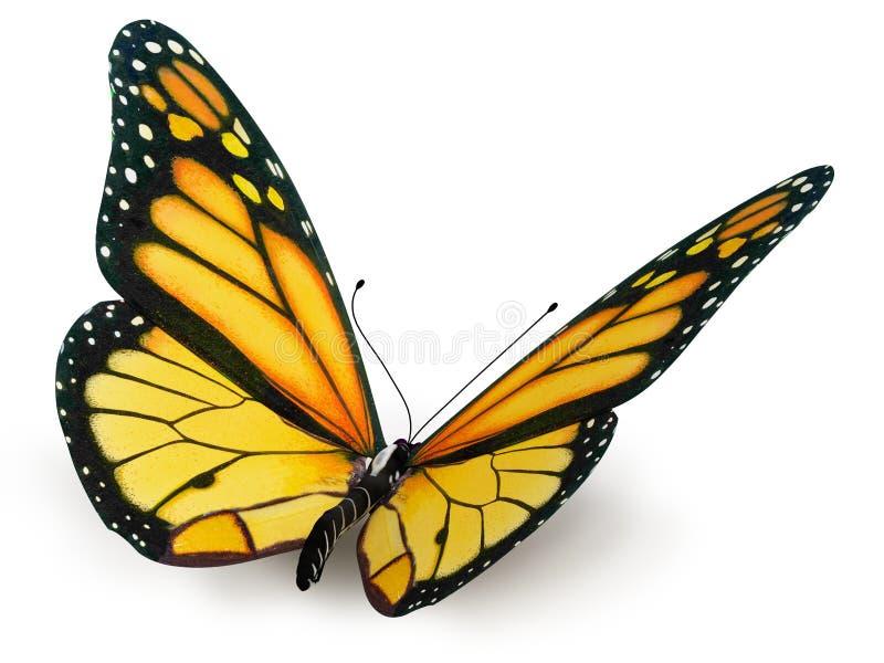 Schmetterling lizenzfreie abbildung