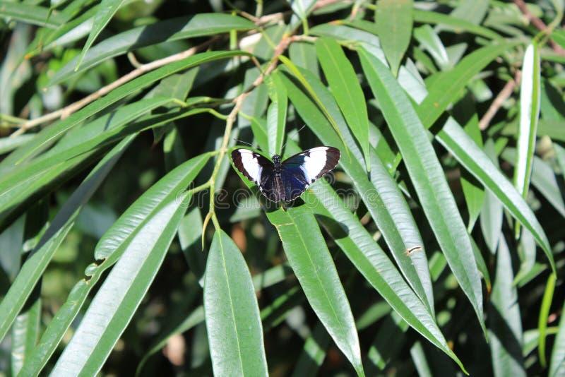 Schmetterling auf Blatt stockbild