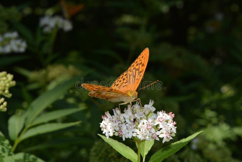 Schmetterling auf Blume stockbilder