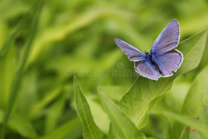 Schmetterling auf dem Blatt lizenzfreie stockfotografie