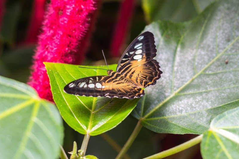 Schmetterling auf dem Blatt lizenzfreies stockfoto