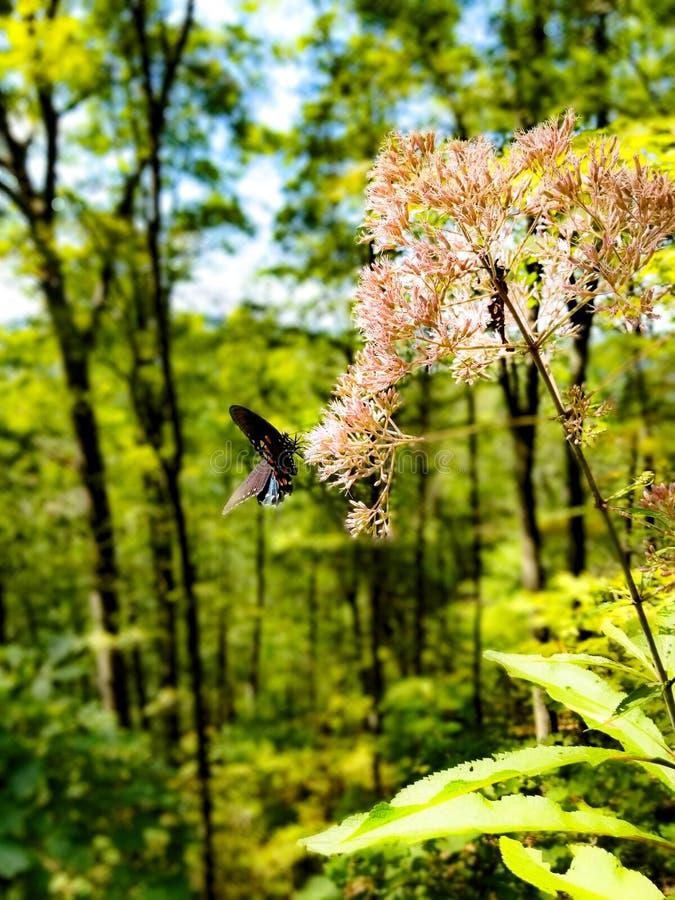 Schmetterling auf dem Dollar kahl lizenzfreie stockfotografie
