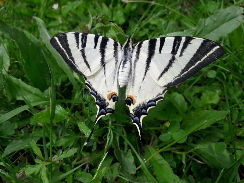 Schmetterling auf dem Drahtzaun stockbilder