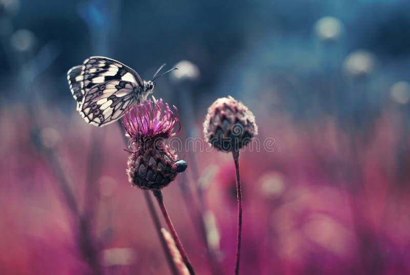 Schmetterling auf der Blume stockfotos