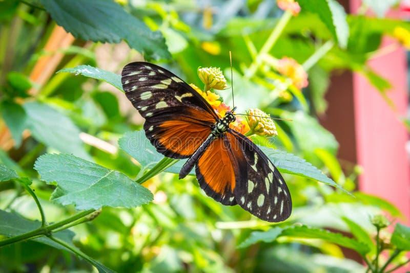 Schmetterling auf der Blume stockbild