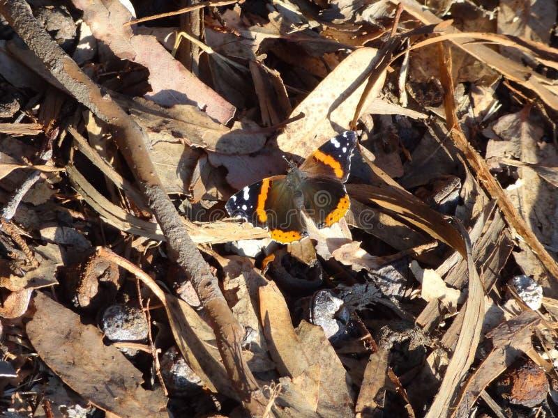Schmetterling auf der Küstenspur stockfoto