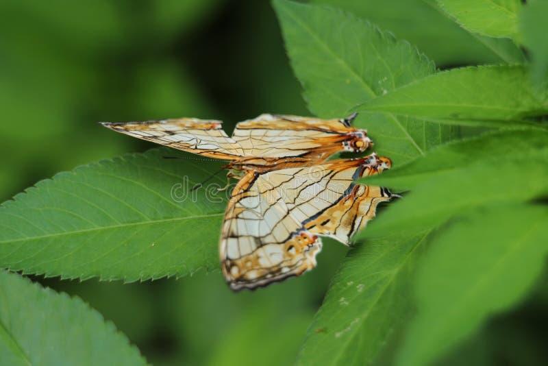 Schmetterling auf einem Blatt stockfoto