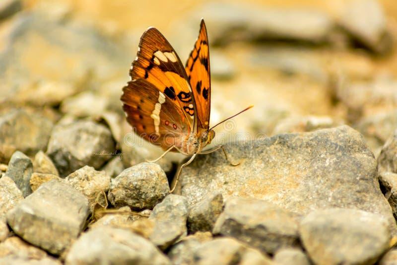 Schmetterling auf einem Felsen lizenzfreie stockfotos