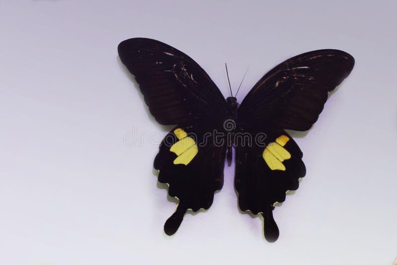 Schmetterling auf einem sauberen Hintergrund lizenzfreie stockfotografie