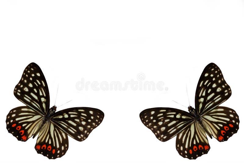 Schmetterling auf einem sauberen Hintergrund lizenzfreies stockbild